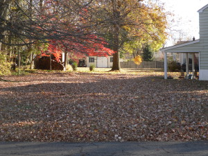 YARD SEARCH AREA 111413 (3)