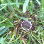 derrylyn ring